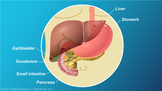 Location of Pancreas
